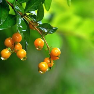 听着雨水轻轻叩击大叶杨或梧桐树那阔大的叶片时沙沙的声响,那种滋润