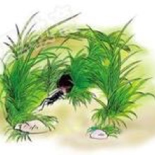 【四年级上课文7 《蟋蟀的住宅》】在线收听_