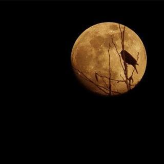 为你读诗——月夜