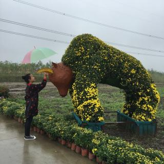 【疯狂动物城 4】在线收听_红叶子的诗园_荔枝fm