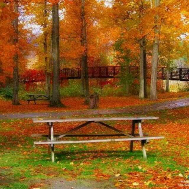 美丽,在落叶凋谢时