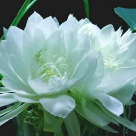 藕花深处,心淡如莲