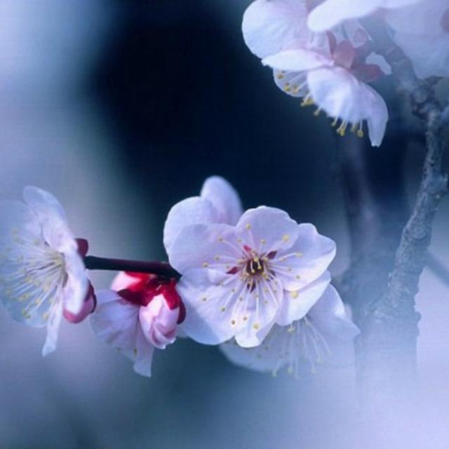 花瓣飘落,因谁会珍惜