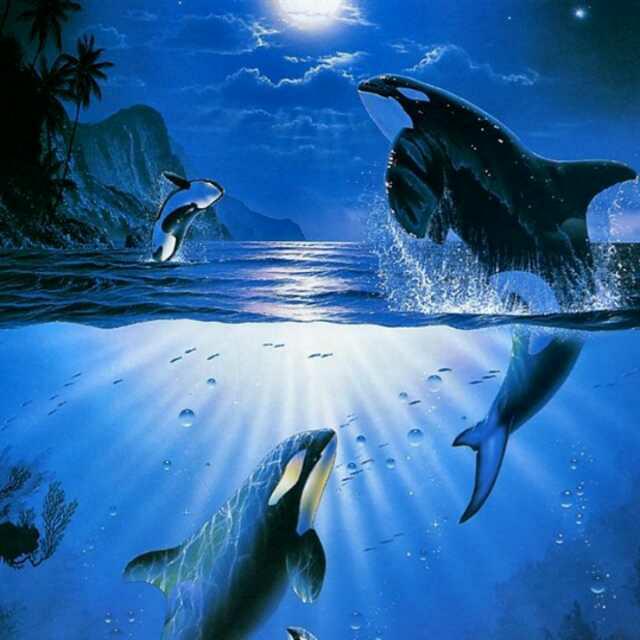 大海的魅力
