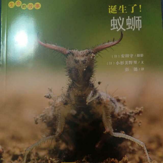 诞生了!蚁蛳