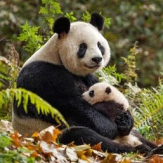 第112期:自然保护在中国—寻求人与自然的边界与平衡