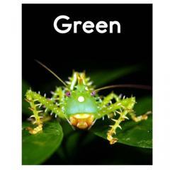Raz aa: Green
