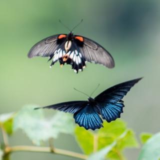 幼儿园中班美术蝴蝶飞啊飞图片