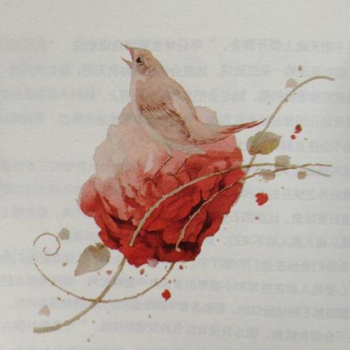 【Story Night】夜莺与玫瑰