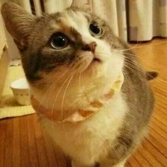 小貓簡筆畫公主彩色