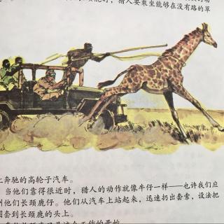 大英儿童百科全书 1-22 animals 动物:怎样捕捉长颈鹿