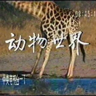 【央视《动物世界》片头曲】在线收听_经典国产电影剧