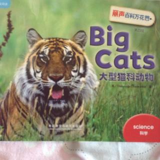 big cats 大型猫科动物
