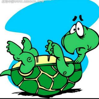 【可爱的动物】乌龟的四条腿那么短,如果四脚朝天能自己翻身吗?