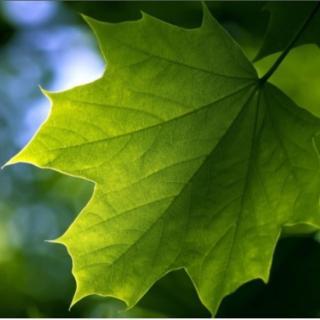 绿叶微信头像图片