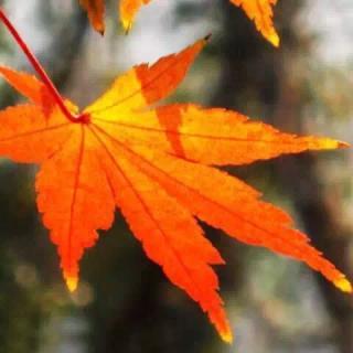 树叶纷纷扬扬落下