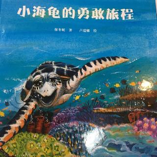 睡前故事67-《小海龟的勇敢旅程》