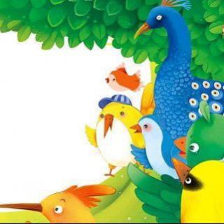 小孔雀找朋友