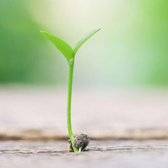 【第二十八课 种子的力】在线收听_童声美文朗读_荔枝