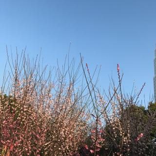 小区里的樟树,樱树,柳树,桂花树等各种树木一棵棵,一排排,高大紧密,枝