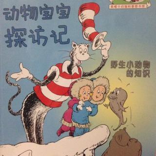 戴帽子的猫科普-野生小动物的知识