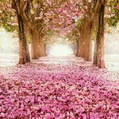 樱落 · 散花 - 水月陵