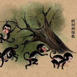 【【170301体坛先锋上】树倒猢狲散,乐视怎渡辊图纸刀刀架图片