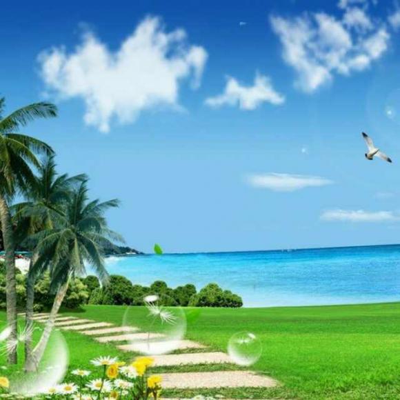 落叶海边风景图片