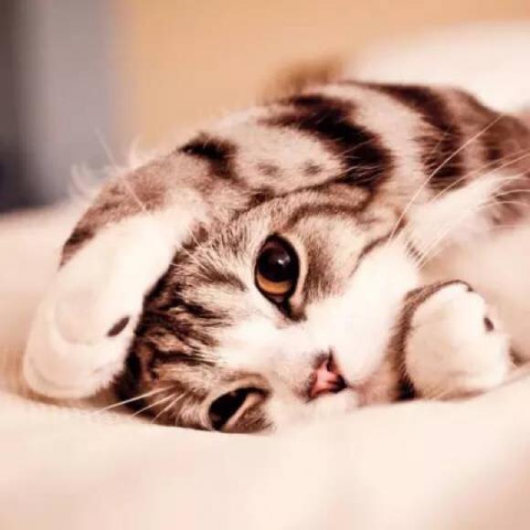 壁纸 动物 猫 猫咪 小猫 桌面 580_580