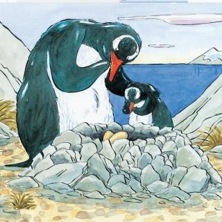 海洋动物真奇妙 - 小企鹅艾伯塔