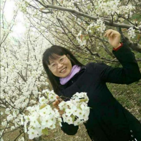 桐树是先开花后长叶子的.图片