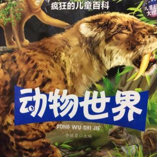疯狂的儿童百科之动物世界