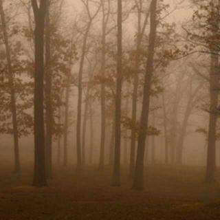美国林务局搜救员怪异事件