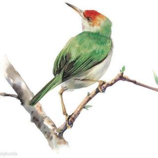 可爱的小鸟韩佳婠
