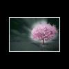一棵开花🌸的树