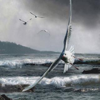 海燕高尔基人类有捕杀过虎鲸吗图片