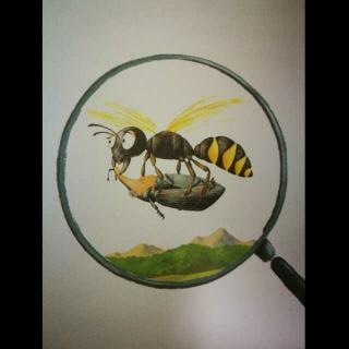 聪明的猎人节腹泥蜂