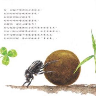 昆虫记 粪金龟下