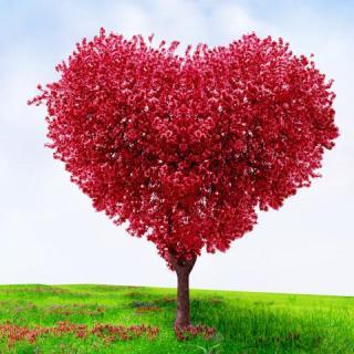 红色爱心风景树