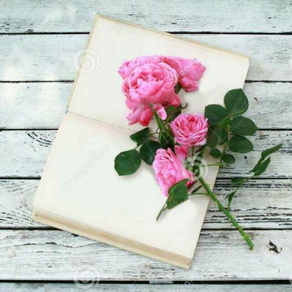 壁纸 花 花束 鲜花 580_580图片