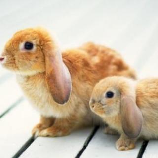 大兔子和小兔子 片段一