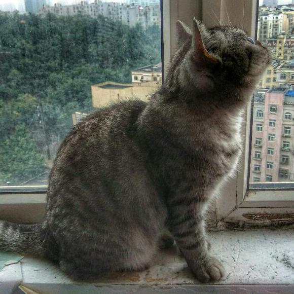 那只喜欢看风景的猫