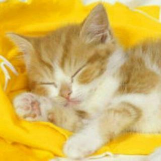 《和猫在一起》#晚安故事