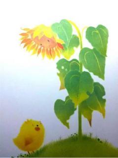 新爱婴睡前故事|小鸡球球和向日葵🌻