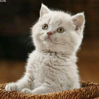 可爱小猫图片带字