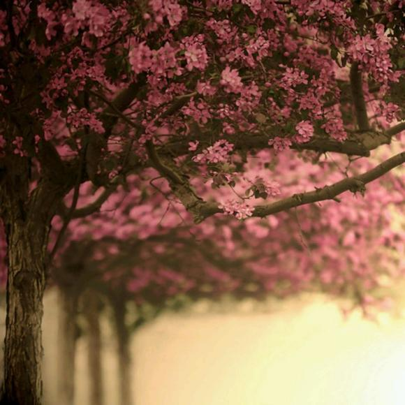 幸福的一日 致秋天的花楸树