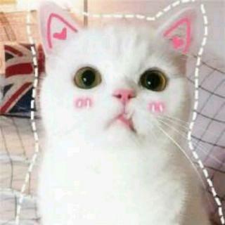 可爱小猫再见动图 gif