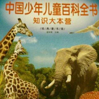 动物世界 8 动物之最(最大的史前动物 最原始的哺乳动物)