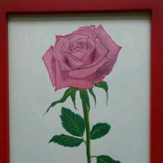 恋恋画画 回忆,玫瑰花的由来  0 0