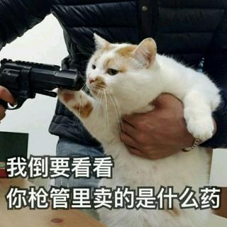 李子英语怎么读音发音_松鼠英语怎么读音发音_小猫咪英语怎么读音发音